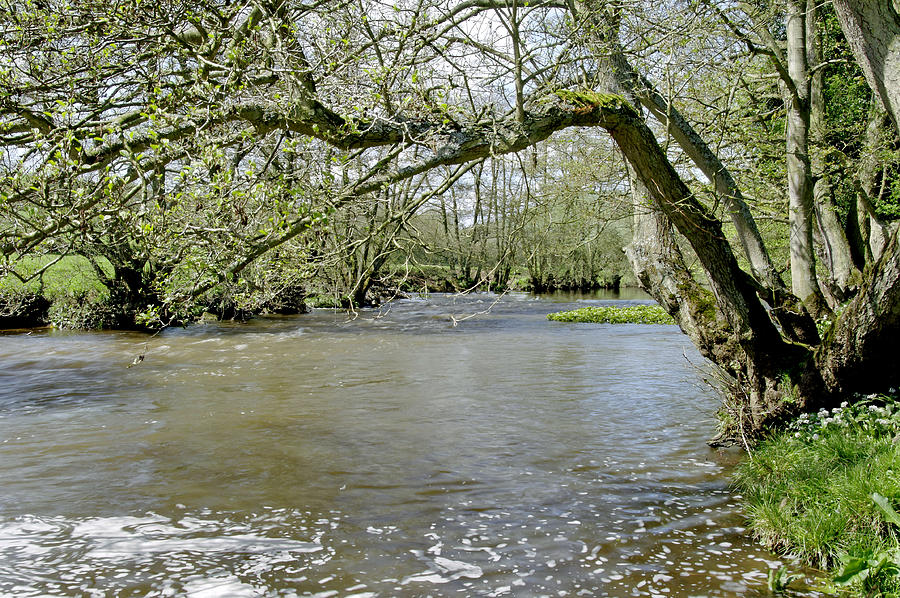 Tree-lined - Swollen River Dove At Thorpe Photograph