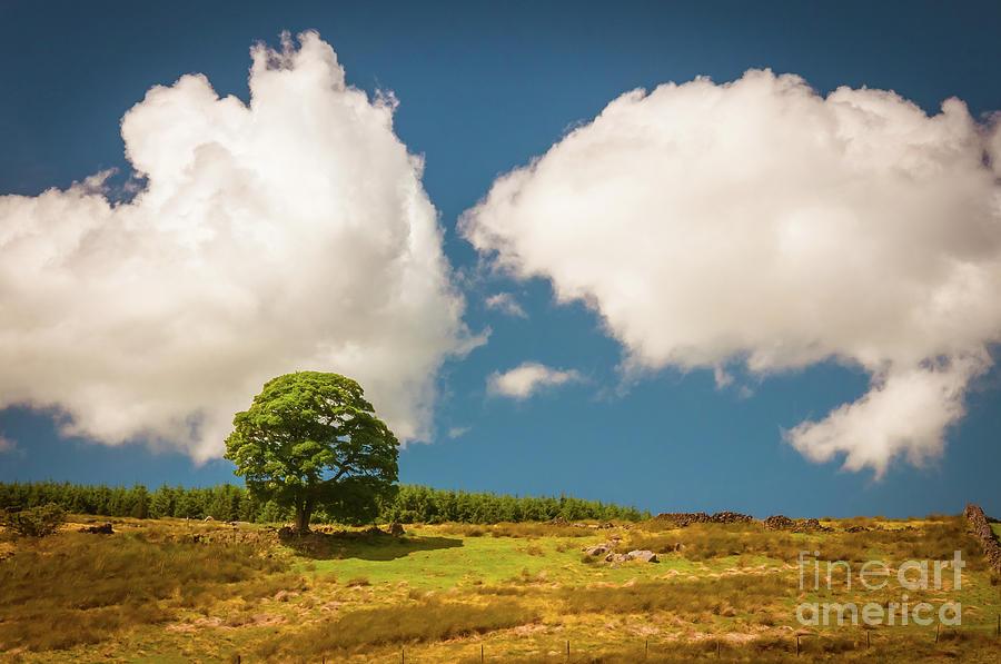 Tree Photograph