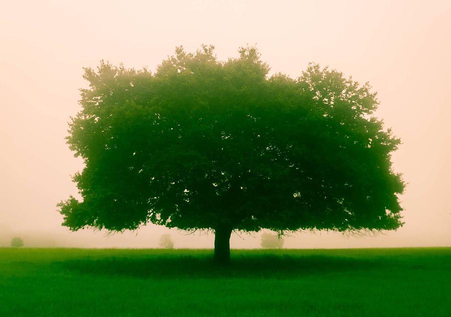 Trees Photograph - Tree by Mark Jones
