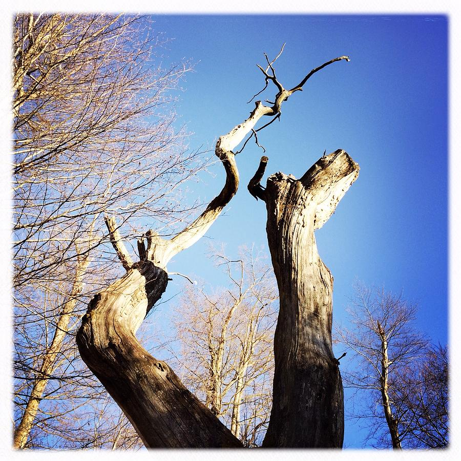 Tree Photograph - Tree by Matthias Hauser