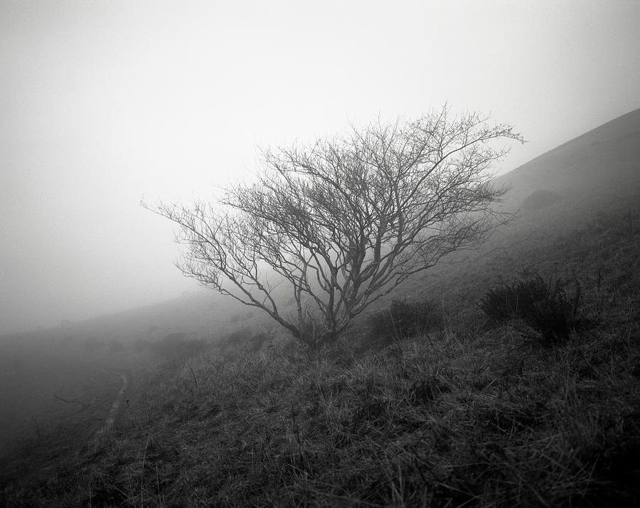Nature Photograph - Tree Mist by Benjamin Garvey