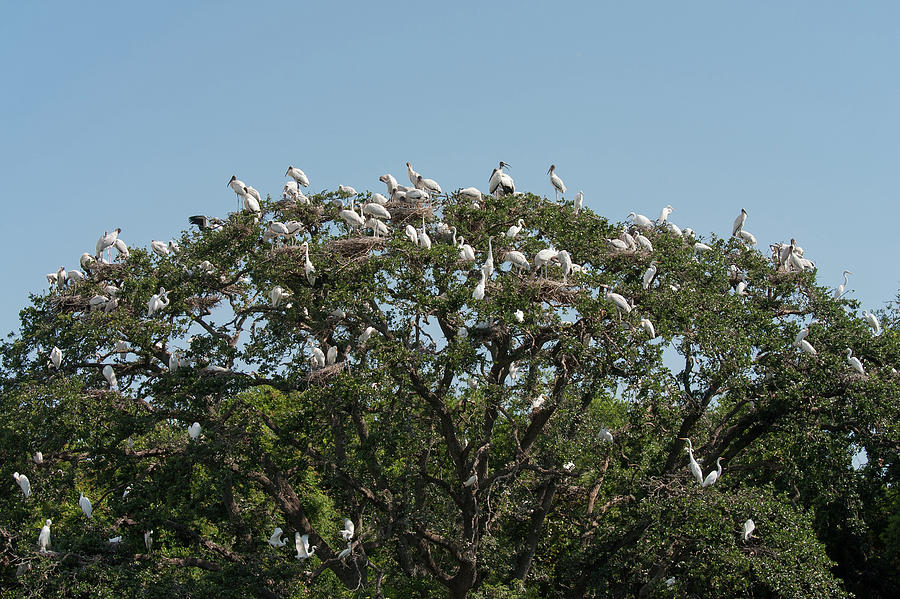 Tree Of Bird Life Photograph