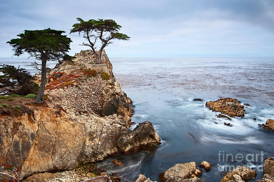 Lone Cypress Photograph - Tree of Dreams - Lone Cypress tree at Pebble Beach in Monterey California by Jamie Pham