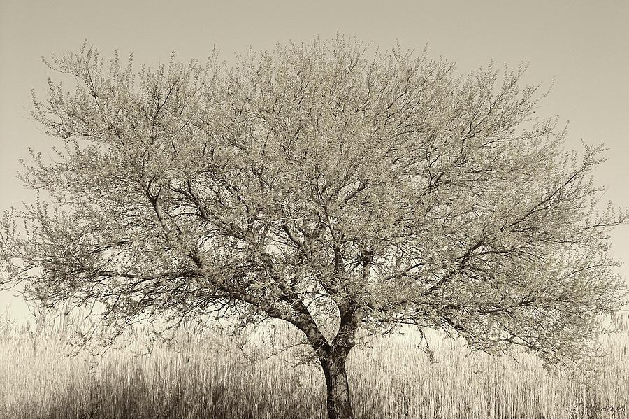 Tree Photograph - Tree Of Life 1 by Joseph Hedaya