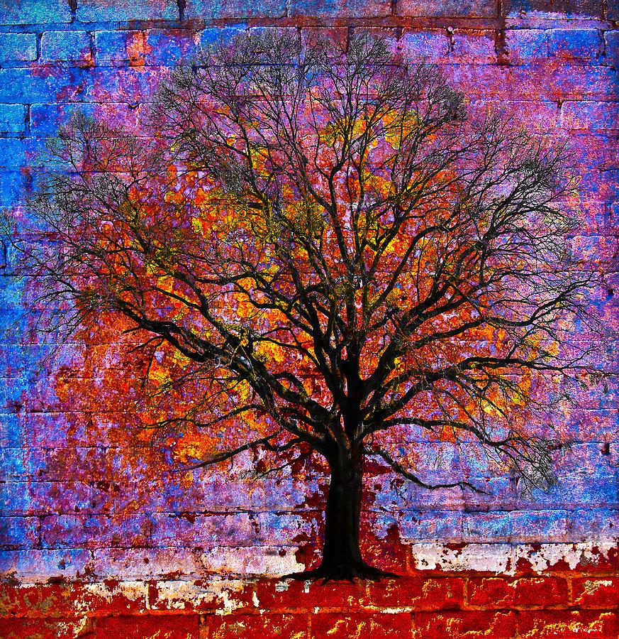 Tree Photograph - Tree Of Life by David Clanton