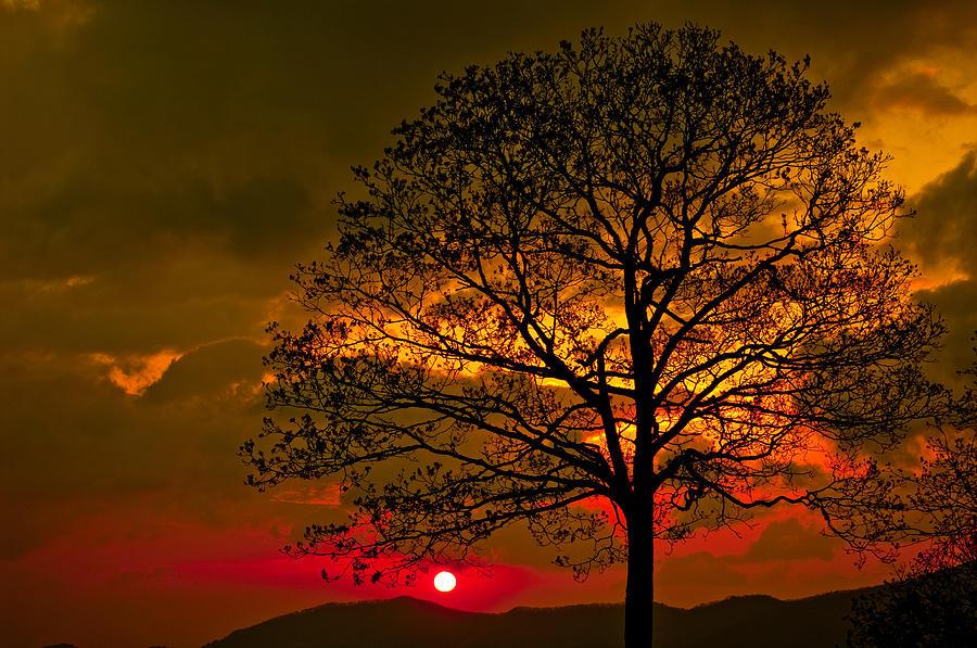 Landscape Photograph - Tree Of Life by Itai Minovitz