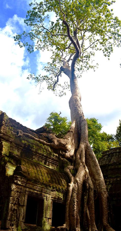 Temple Photograph - Tree Of Life by Jane Rachel Mendoza