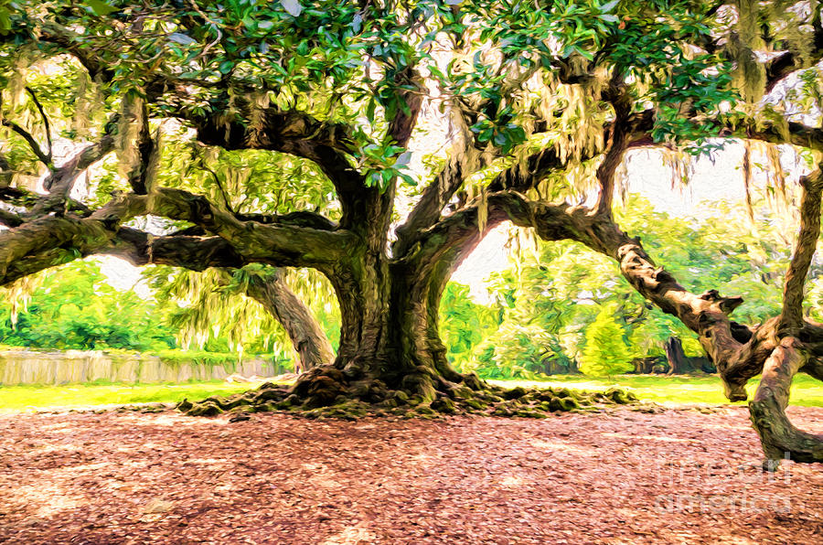 Tree Of Life Nola Photograph By Kathleen K Parker