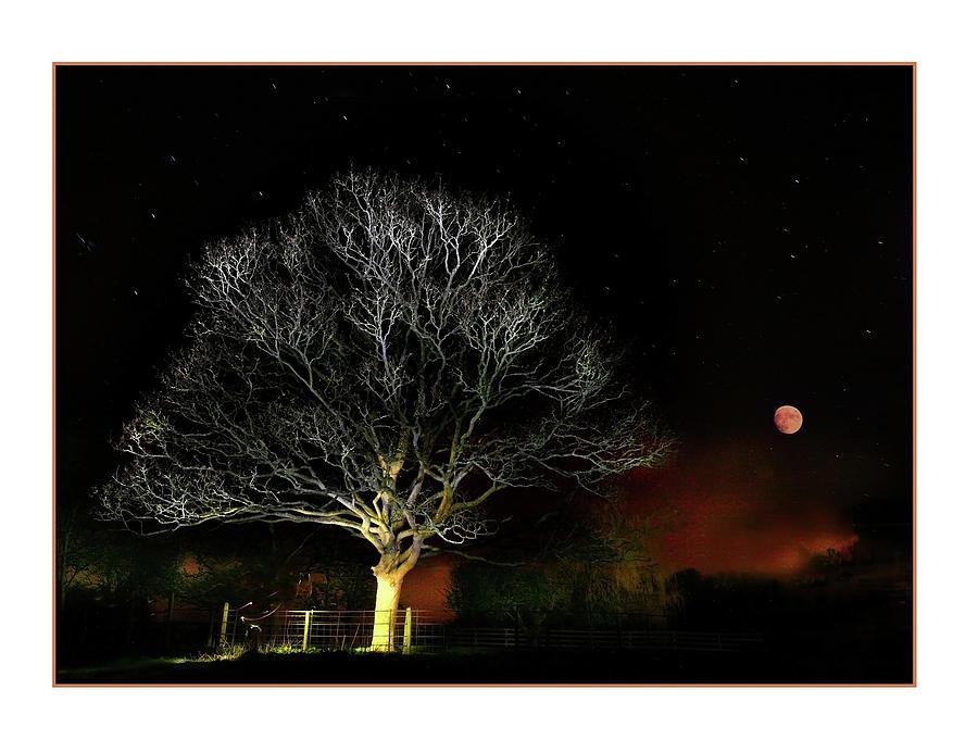 Tree Photograph - Tree Of Light by Mal Bray