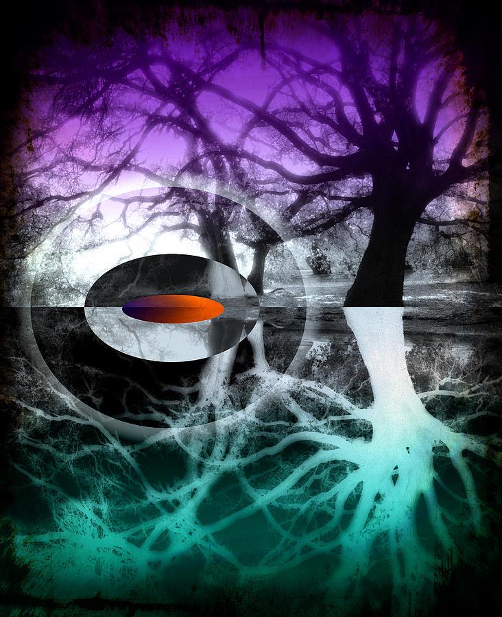 Tree Photograph - Tree Of Shadows by Michi Sherwood