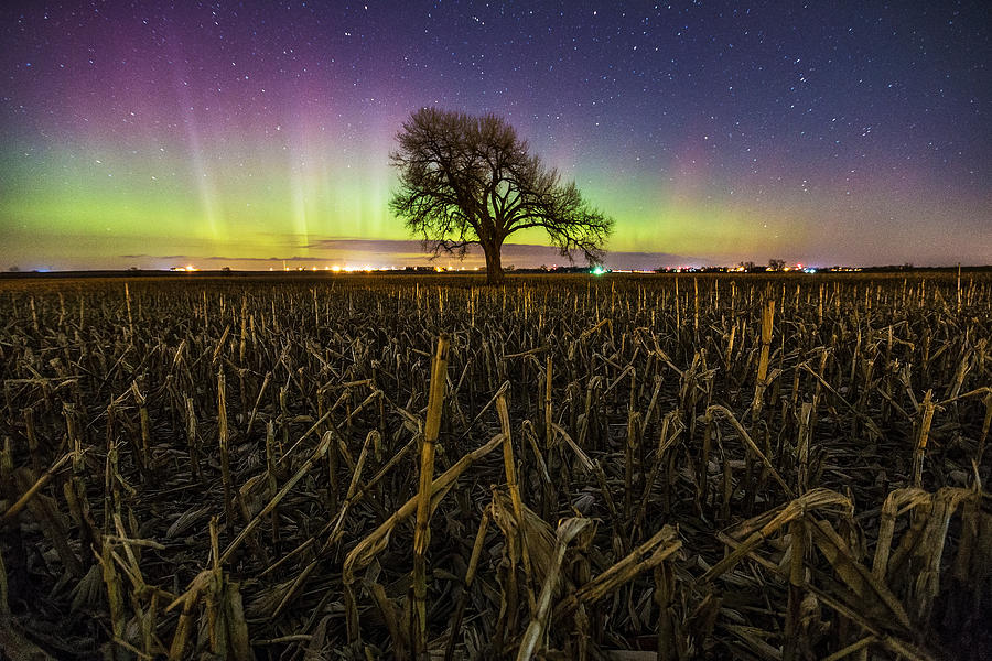 Aurora Photograph - Tree of Wonder by Aaron J Groen