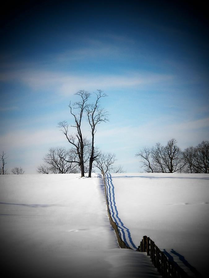 Virginia Photograph - Tree On A Hill by Joyce Kimble Smith