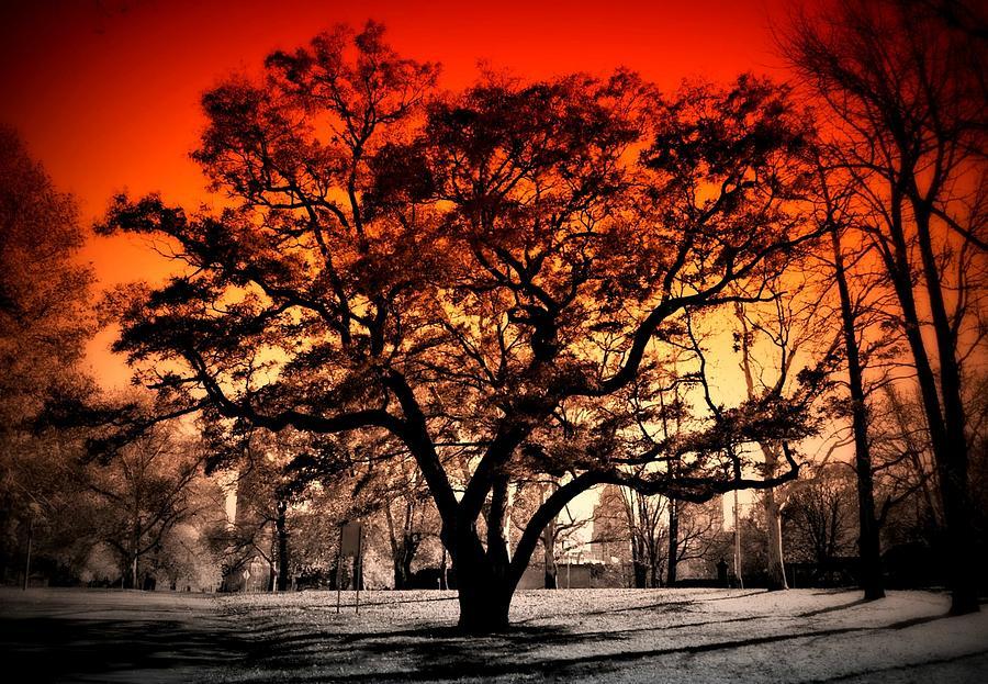 Tree on Fire Photograph by Alicia Romano