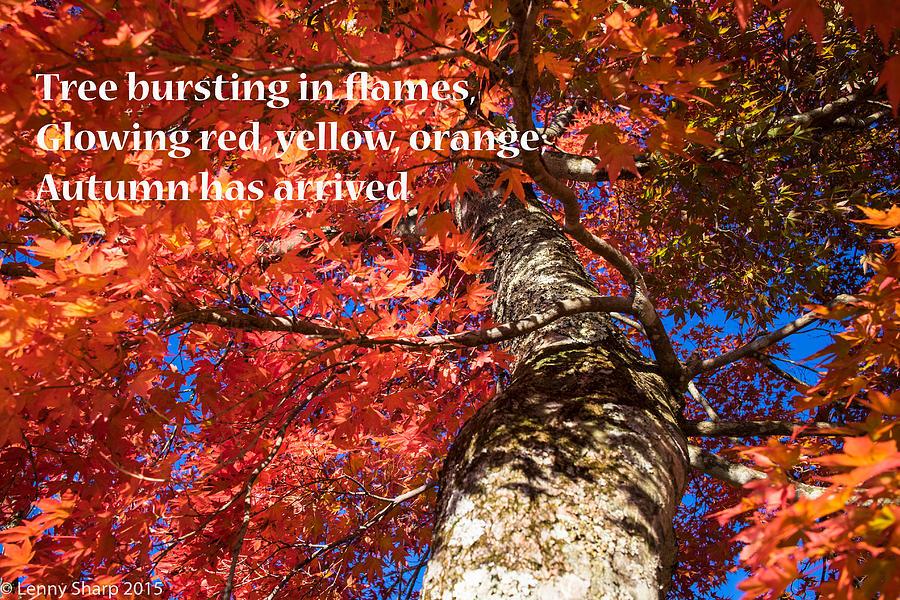 Fall Photograph - Tree On Fire - Haiku by Leonard Sharp