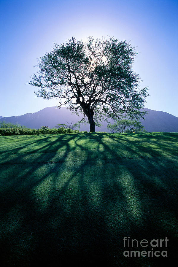 Blue Photograph - Tree On Grassy Knoll by Carl Shaneff - Printscapes