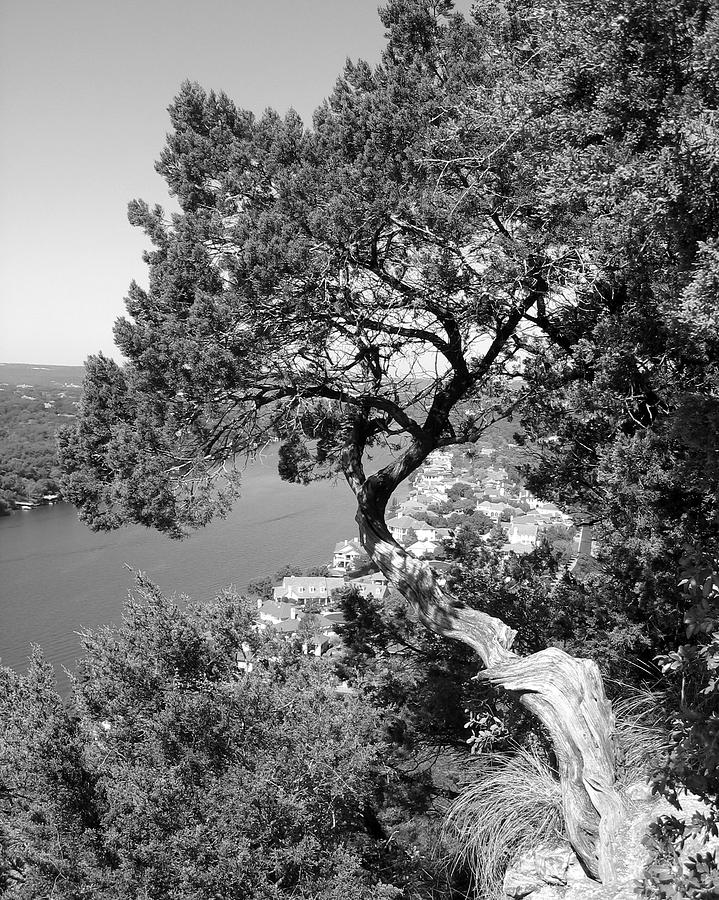 Mount Bonnell Photograph - Tree On Mount Bonnell by Lindsey Orlando