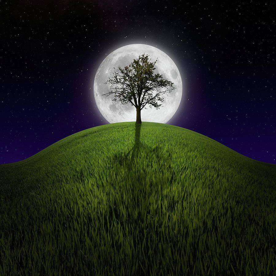 Tree On Night Hill Lit By Moon Photograph