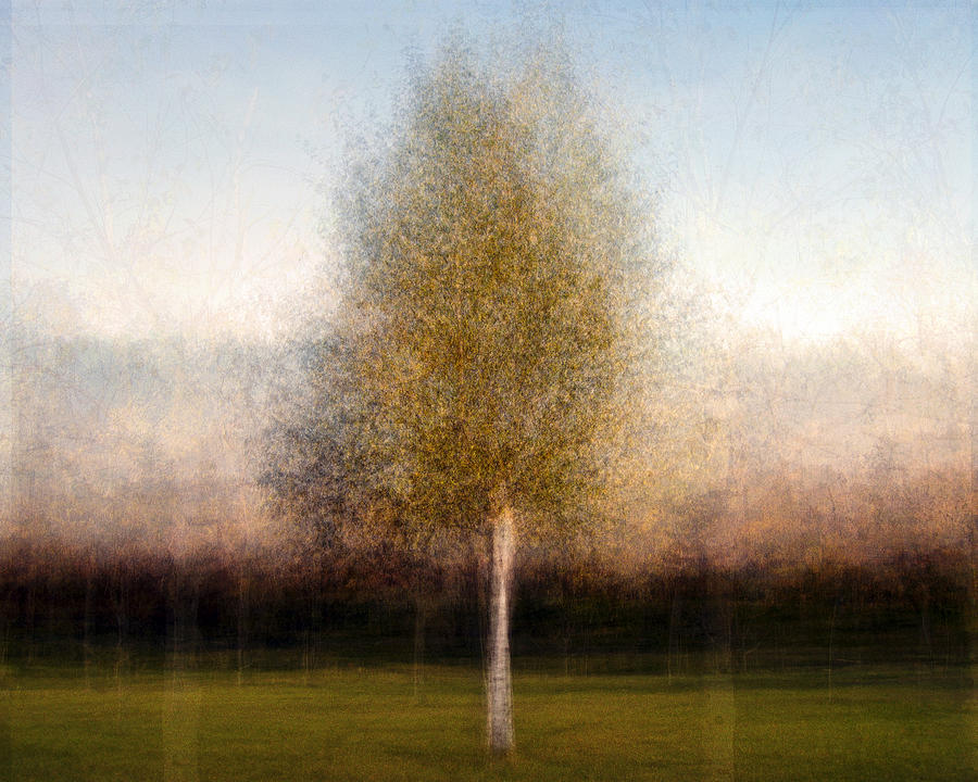 Tree Photograph - Tree One by Denis Bouchard