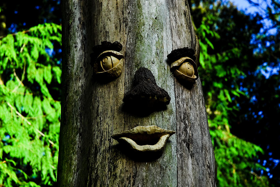 Trees Photograph - Tree People by Craig Perry-Ollila