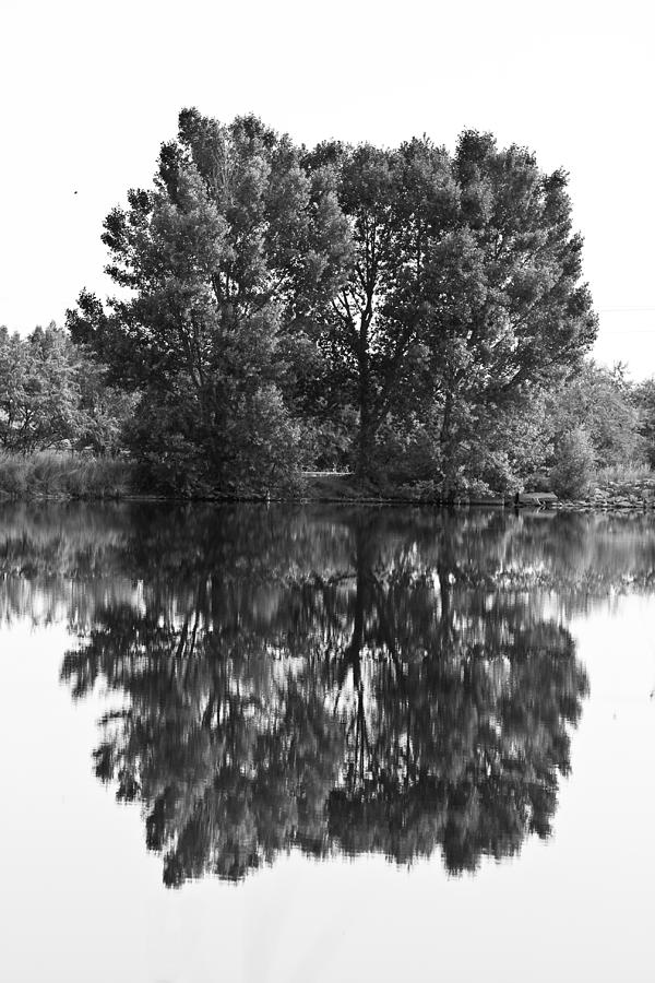 Reflections Photograph - Tree Reflection In Black And White by James BO Insogna