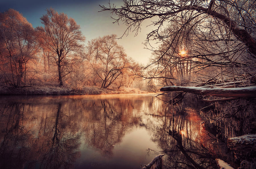 Horizontal Photograph - Tree Reflection In River by Philippe Sainte-Laudy Photography