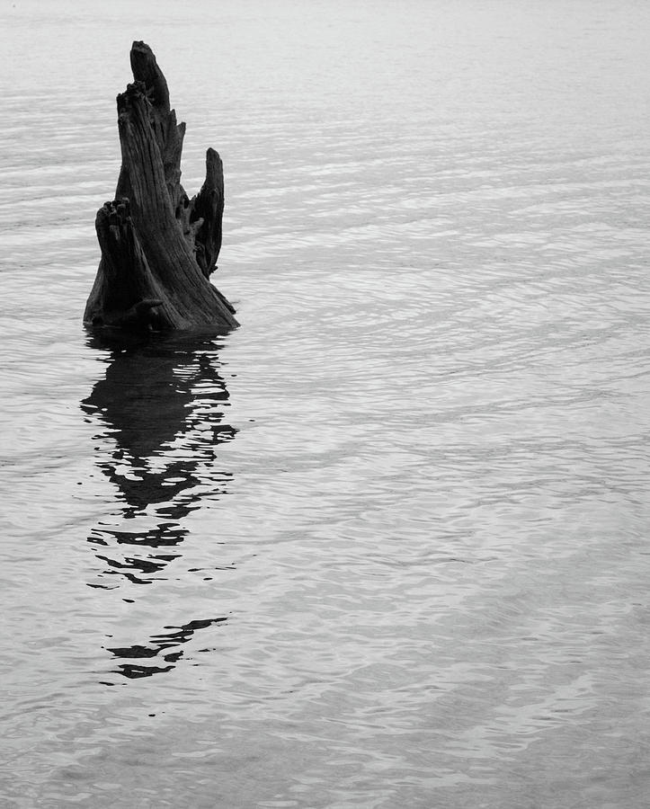 Tree Photograph - Tree Reflections, Rest In The Water by Trance Blackman