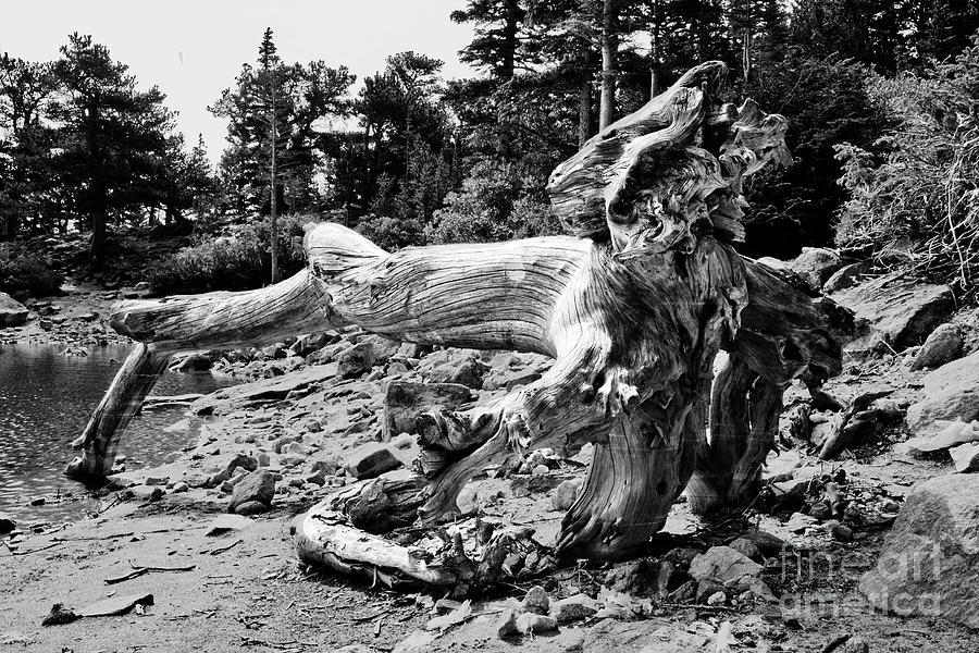 Tree Photograph - Tree Roots by James Jones