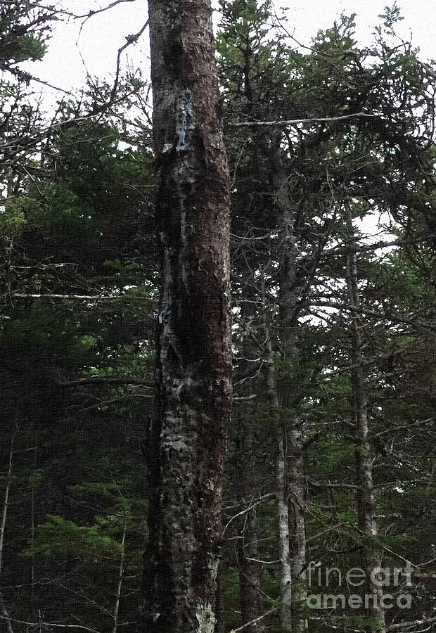 Tree Sap - Crying Tree by Barbara Griffin