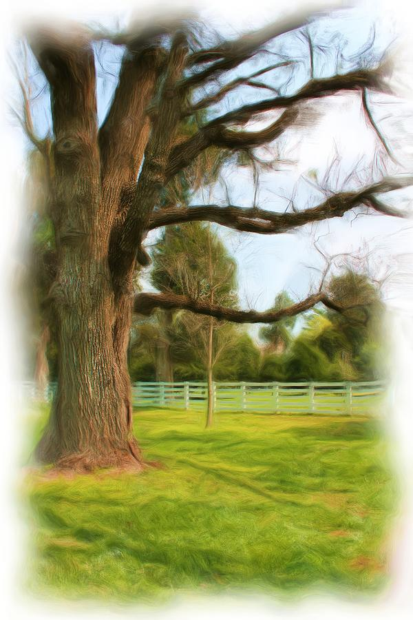 Nature Photograph - Tree Series 1323 by Carlos Diaz