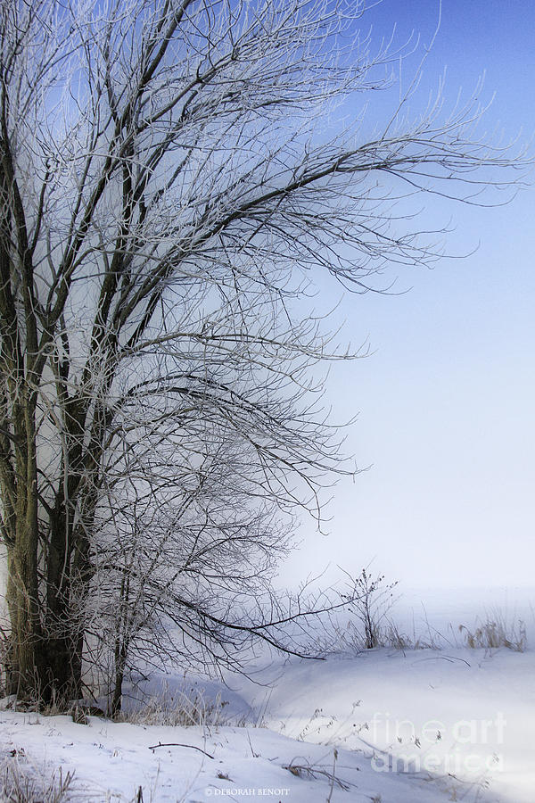 Winter Photograph - Tree-snow-fog by Deborah Benoit
