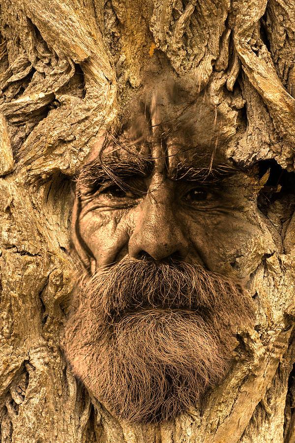Tree Digital Art - Tree Spirit by Lisa Yount
