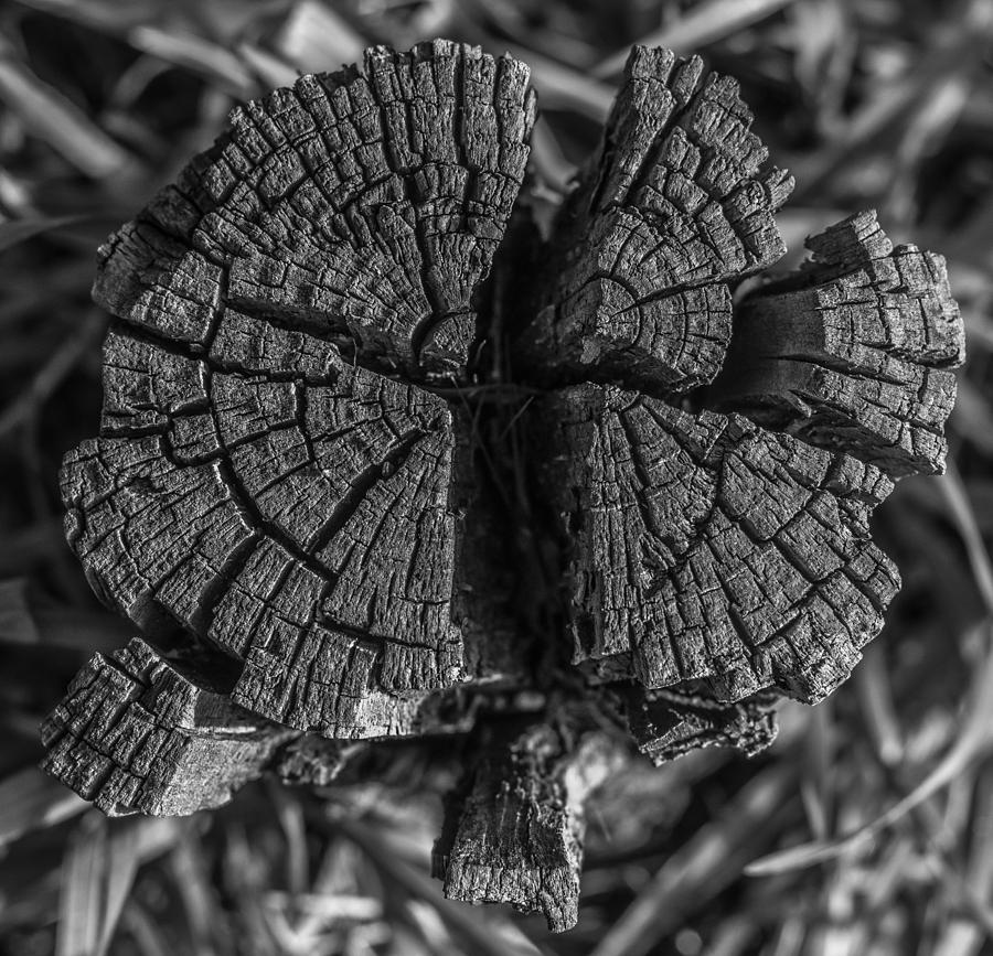Tree Stump Black and White by Richard Cheski