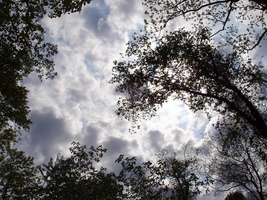 Tree Photograph - Tree Swirl by Deborah  Crew-Johnson
