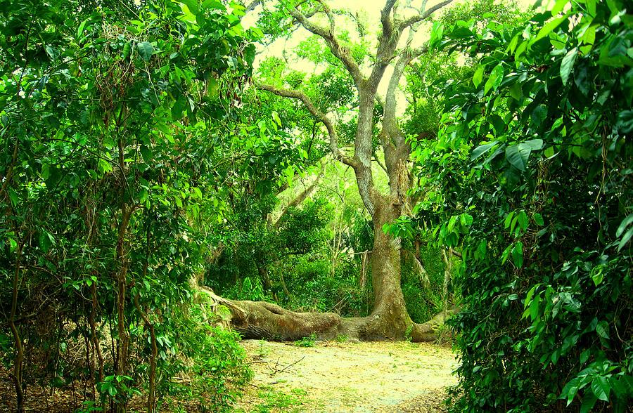 Tree Tops Park Photograph - Tree Tops Park by Heidi Berkovitz