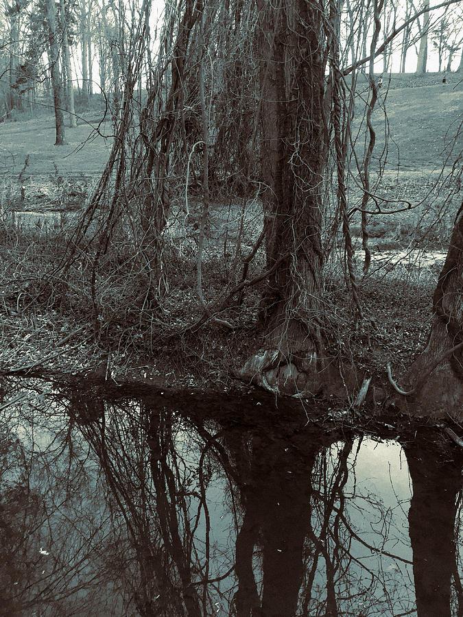 Tree Vines Water by Robert G Kernodle