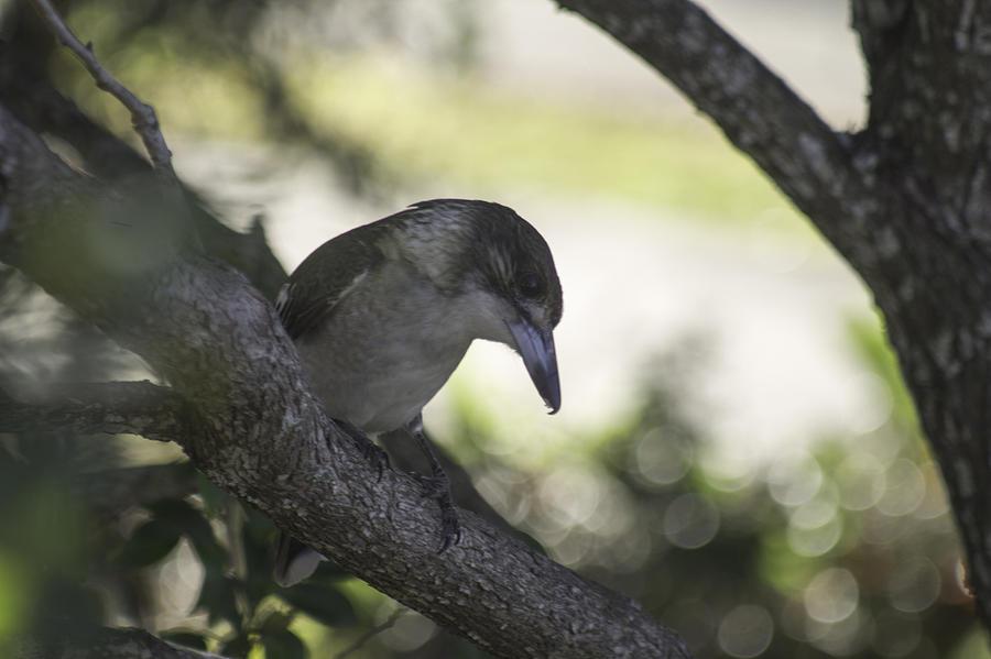 Tree Watcher Photograph