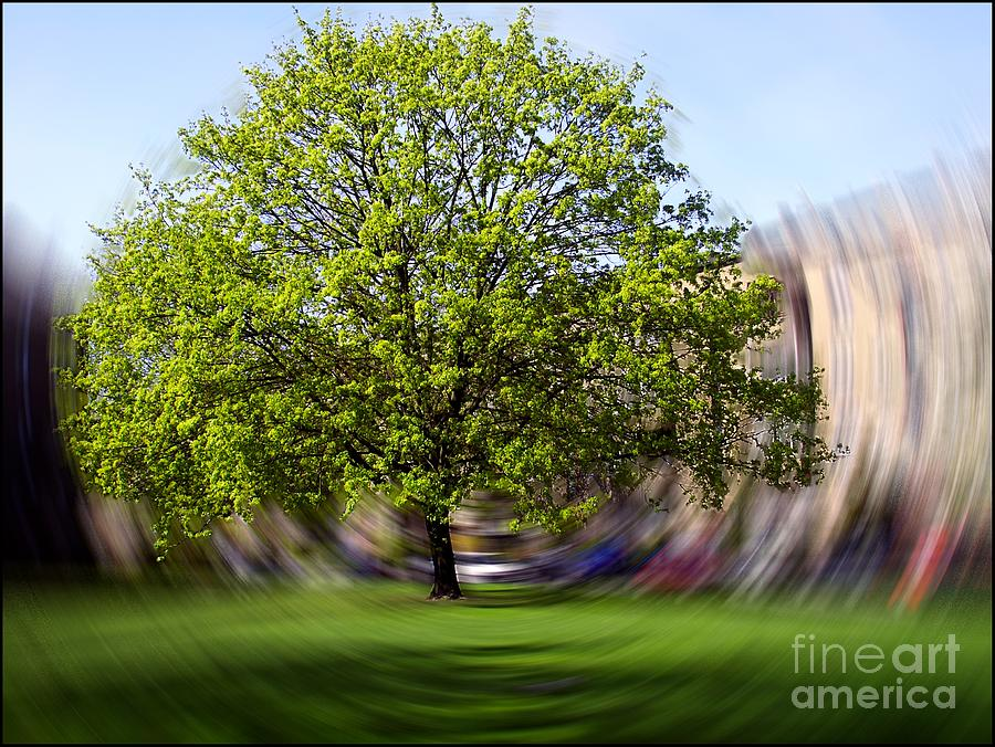 Tree Photograph - Tree With Animated Surroundings by Sascha Meyer