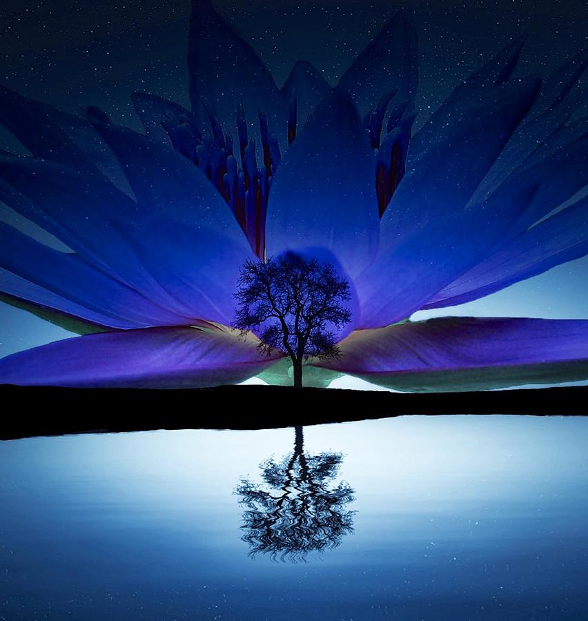 Tree with Lotus 3 by Matty Archer