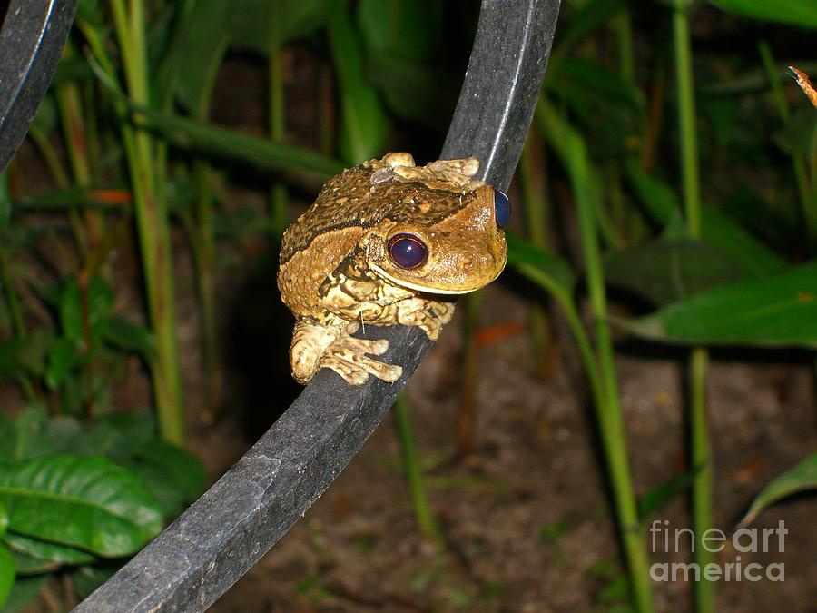 Tree Photograph - Treefrog by Jim Thomson