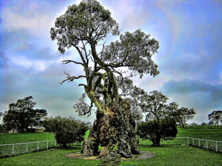 Tree Photograph - Treehouse by Douglas Barnard