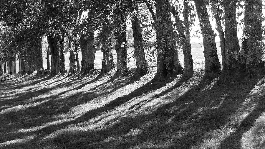 B&w Photograph - Treeline by Amy Tyler