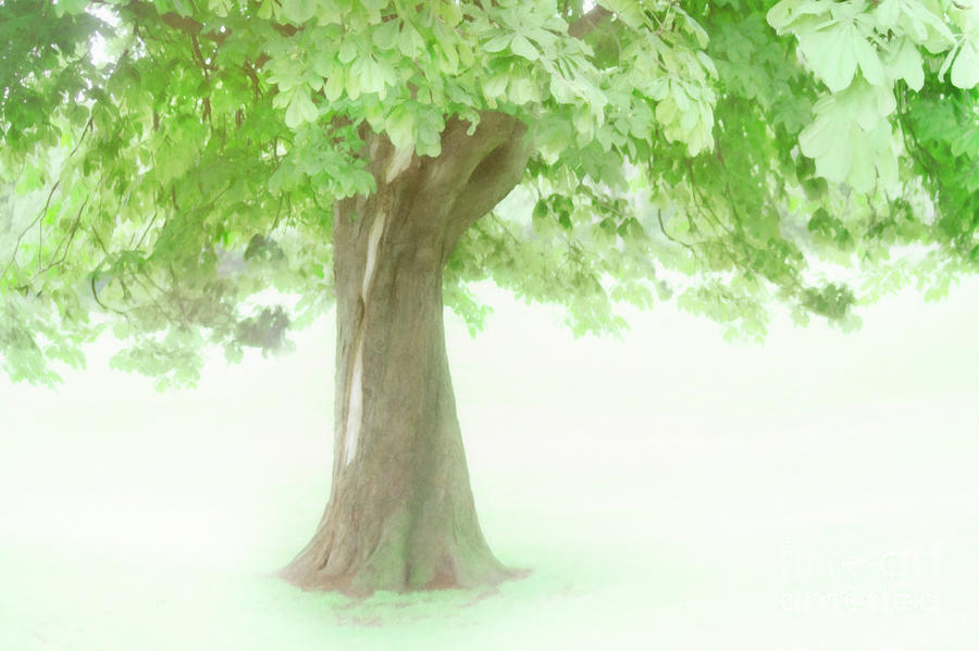 Tree Photograph - Treeness by Hal Halli