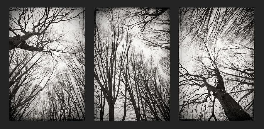 Bw Photograph - Treeology by Dorit Fuhg