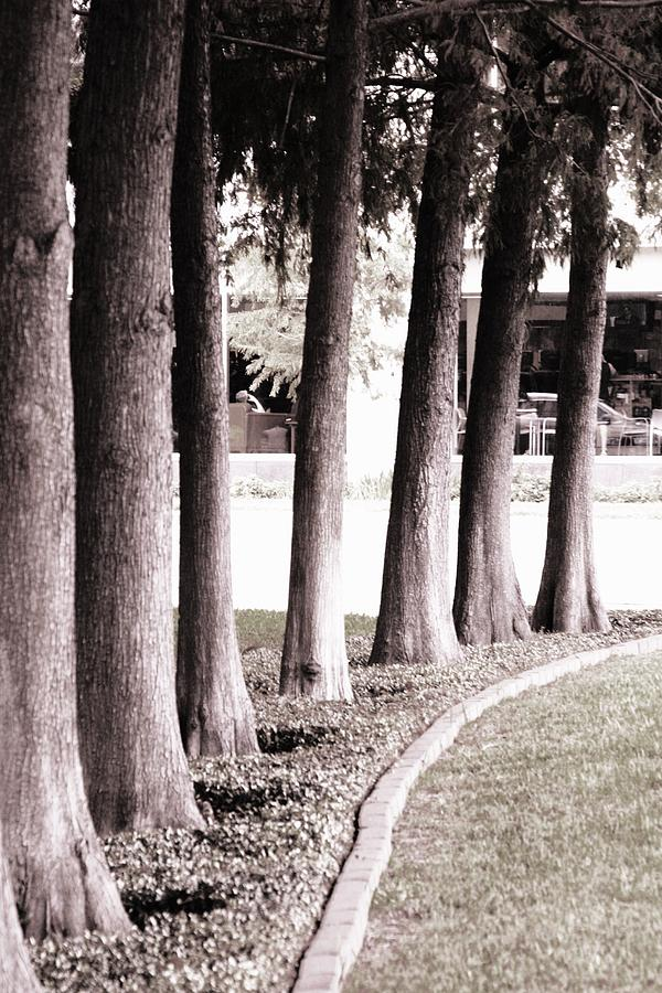 Trees Photograph - Trees 2 by Gracey Tran