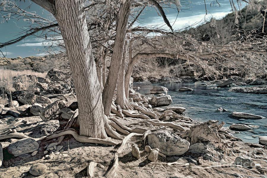 Infrared Photography Photograph - Trees Along The Pedernales by Norman Gabitzsch
