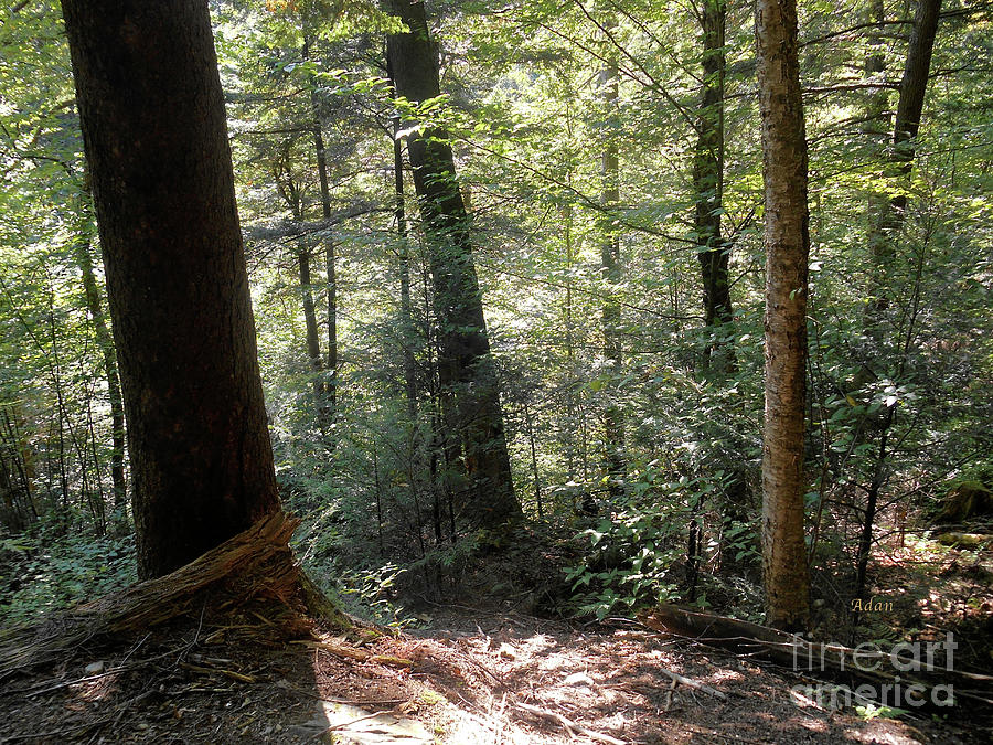 Stowe Vermont Photograph - Trees Among The Light Bingham Falls Vermont by Felipe Adan Lerma