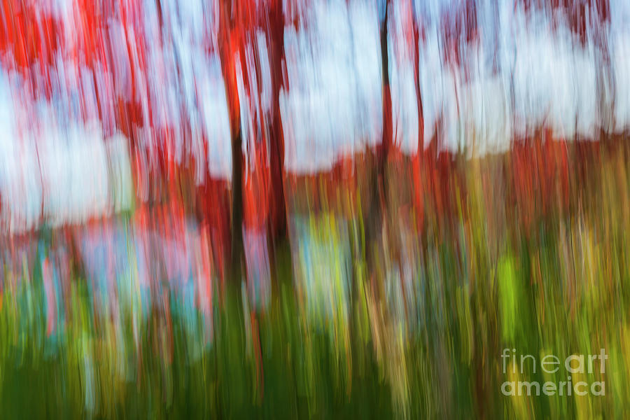 Abstract Photograph - Trees And Lake by Elena Elisseeva