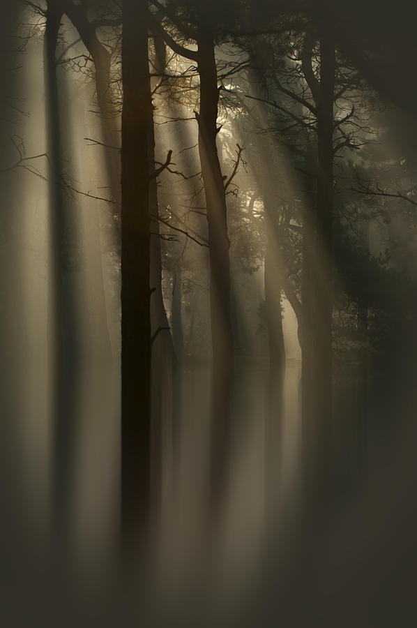 Sun Photograph - Trees And Light by Andy Astbury