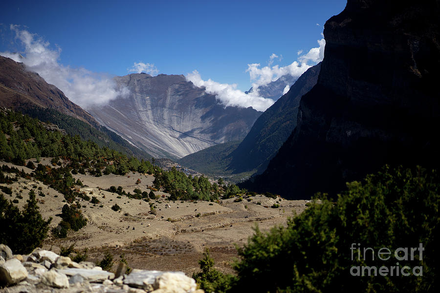 Trees and snowcapped peak at background in the Himalaya mountains, Nepal by Raimond Klavins