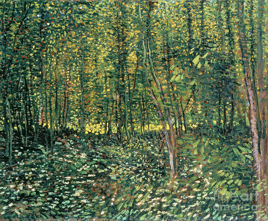Trees Painting - Trees And Undergrowth by Vincent Van Gogh